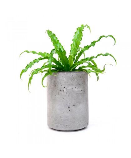 Кашпо Cylinder 205 Flower pots